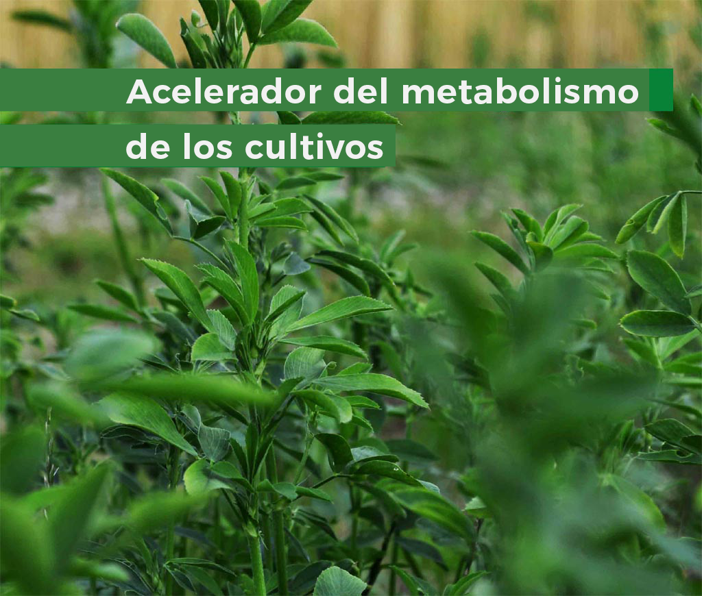 ficosgreen-ficosterra.com-Bioestimulante-biofertilizante