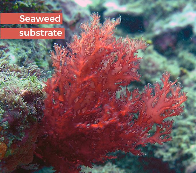 gelidium-s-ficosterra.com-Sustrato-vegetal-de-bokashi-de-algas-marinas