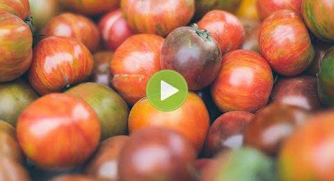 Testimonio Agricultor ensayo hortícola Almería Carlos Muñoz Méndez